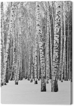 Canvas Print Birch forest in winter in black and white