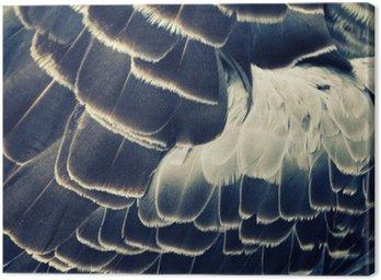 bird's plumage background Canvas Print