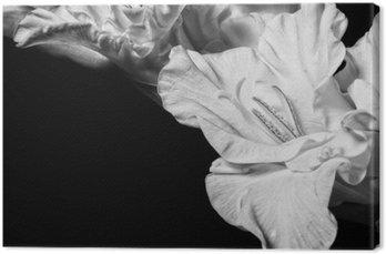 Black and white gladiolus Canvas Print