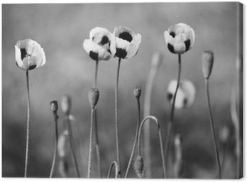 Canvas Print Black and white poppy flowers
