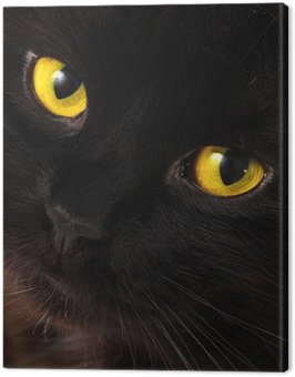 Black cat looking to you with bright yellow eyes Canvas Print