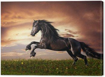 Canvas Print Black Friesian horse gallop