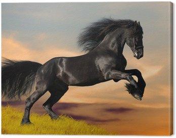Black Friesian horse gallops in sunset