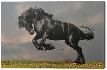 Canvas Print black friesian stallion gallop in sunset
