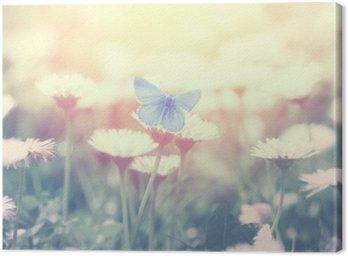 Blue butterfly on the daisy flower
