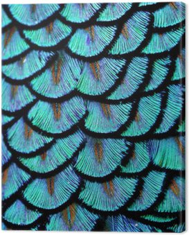 Canvas Print Blue Feathers