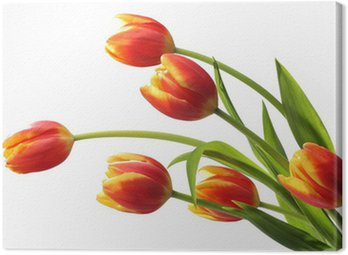 Canvas Print Bouquet of tulips