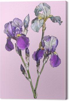 branch of blooming irises