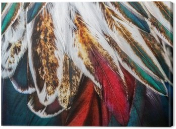 Canvas Print Bright brown feather group of some bird