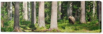 Canvas Print Brown bear in forest panorama