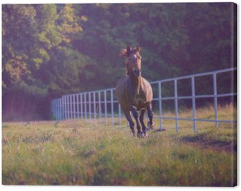 Brown horse galloping on the trees background along white fence at the summer