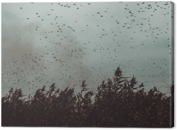 bunch of Birds flying close to cane in a dark sky- vintage style black and white