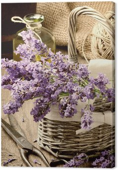 Canvas Print Bunch of freshly cut lavender