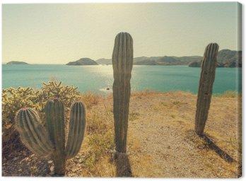 Canvas Print Cactus in Mexico