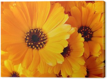 Canvas Print Calendula flowers
