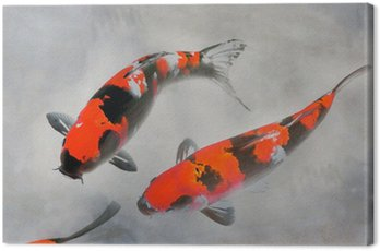 Canvas Print Calico Koi Fish Watercolor Illustration