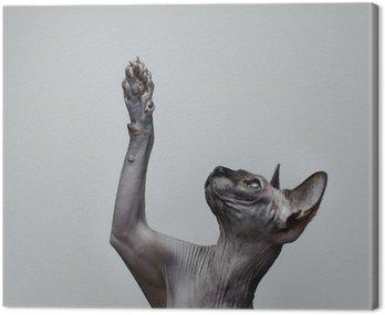 Canvas Print Canadian sphynx cat