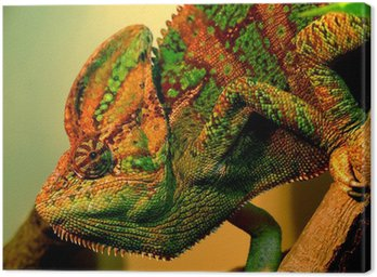Chameleo from Moscow Zoo Canvas Print