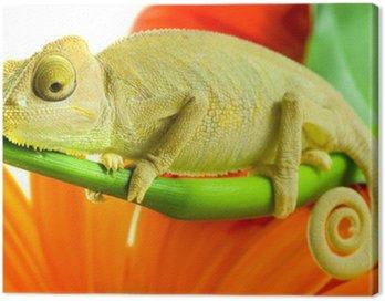 Chameleon on flower. Canvas Print