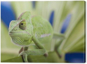 Chameleon on the leaf Canvas Print