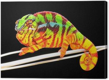 Chameleon Pardalis Canvas Print