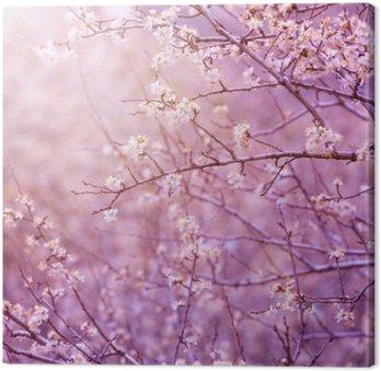 Canvas Print Cherry tree blossom