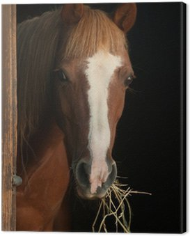 Canvas Print Chestnut pony looking out the stable