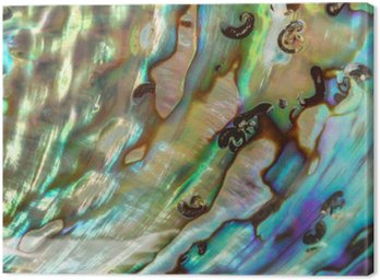 Close up Background of blue, green and purple abalone pearl shel