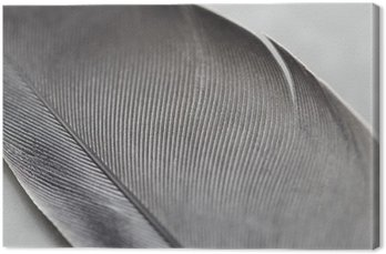 Close up of a feather