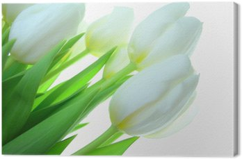 Canvas Print Close-up of bunch of white tulips on white background
