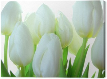Close-up of bunch of white tulips on white background Canvas Print