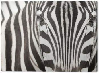 Canvas Print Close-up of zebra head and body with beautiful striped pattern