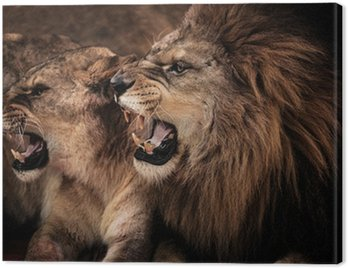 Close-up shot of roaring lion and lioness Canvas Print