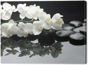 Canvas Print Close up white orchid with stone water drops