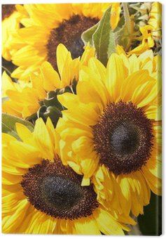 Closeup of yellow sunflowers