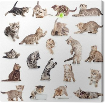 Canvas Print collection of funny playful cat kitten isolated on white backgro