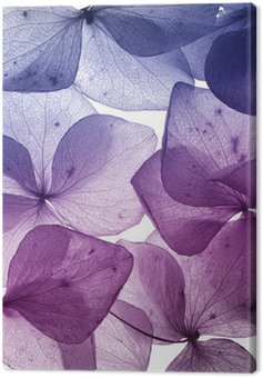 Canvas Print colorful flower petal closeup