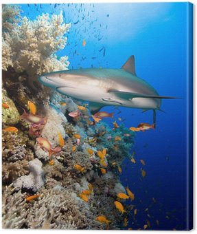 Coral reef with shark