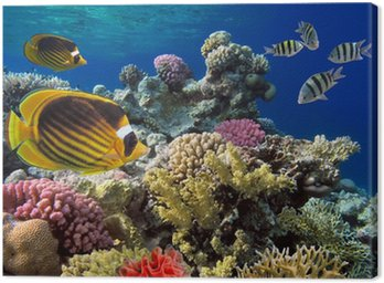 Canvas Print Coral reef with soft and hard corals with giant jellyfish