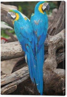 couple macaw Canvas Print