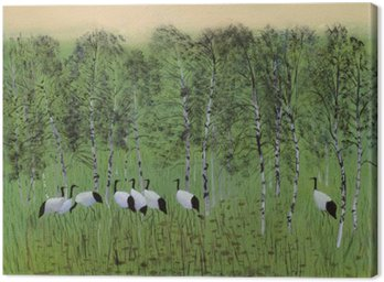 Cranes in the swamp
