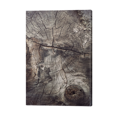 Cross Section Of Ancient Hardwood Tree Canvas Print