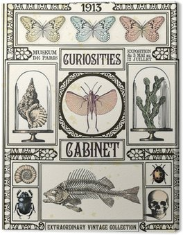 Canvas Print Curiosities cabinet