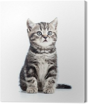 Canvas Print cute black kitten cat isolated on white