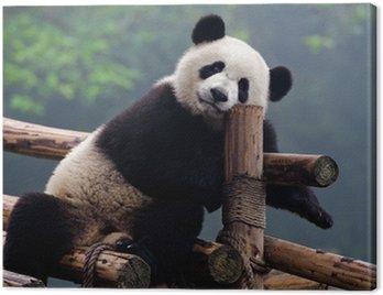 Cute giant panda bear Canvas Print