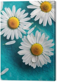 Daisies floating in water Canvas Print