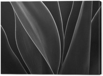 Canvas Print Dancing Agave