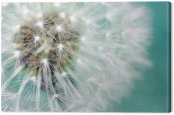 Dandelion fluffy seeds over blue Canvas Print