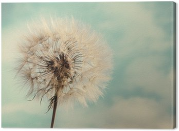 Dandelion Isolated on blue cloudscape Canvas Print