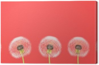 dandelion on colorful background. 3d rendering